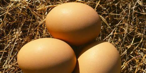 Les oeufs c'est top pour la santé mais choisissez-les bien ! | Végétarisme, santé et vie | Scoop.it