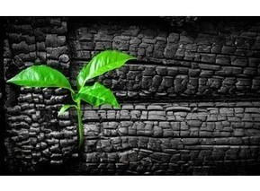 Le charbon végétal activé : indispensable dans la pharmacie familiale|Alternative Santé | Vie de bobo... | Scoop.it
