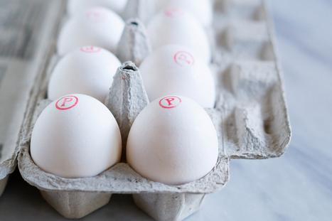 Pasteurized Eggs 101 | FOOD? HEALTH? DISEASE? NATURAL CURES??? | Scoop.it