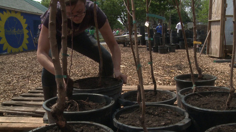 "Urban Fruit Farms: Effort underway to create a ""healthier Milwaukee"" - fox6now.com | AP Human  Geography | Scoop.it"