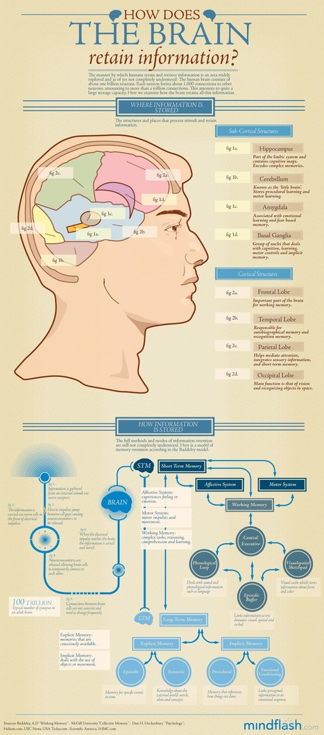 How the Brain Retains Information Infographic | Sustainability & Us | Scoop.it
