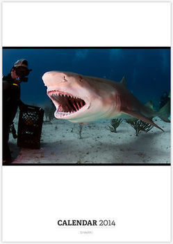 Shark! by Greg Amptman   Undersea Discoveries   Scoop.it