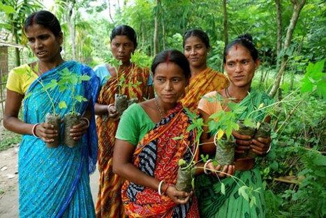 Dans ce village indien, 111 arbres sont plantés à la naissance de chaque petite fille | Biodiversité | Scoop.it