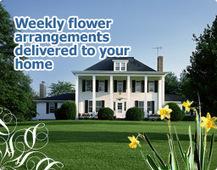 House of Stemms - San Diego Florist Flowers | I Love Body Kits | Scoop.it