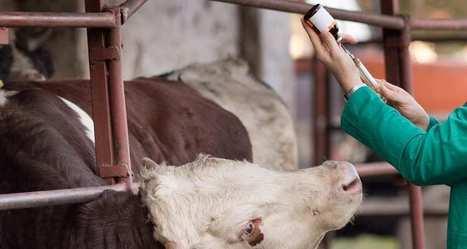 Etats-Unis: des fonds d'investissement en campagne contre la viande aux antibiotiques | Les filières bio | Scoop.it