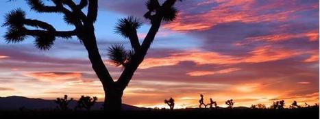 Joshua Tree National Park | Motorhome Madness | Scoop.it