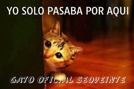 SEOVEINTE - Web Oficial España: En el top diez de Seoveinte, Oh my Cat | Noticias Varias | Scoop.it