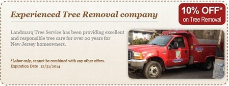 Tree Removal Service Bergen County N | paul77gp | Scoop.it