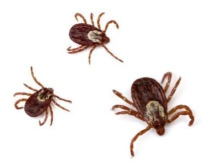 Santa Clara Urgent Care Centers Help Spread Lyme Disease Awareness | USHealthWorks SantaClara | Scoop.it
