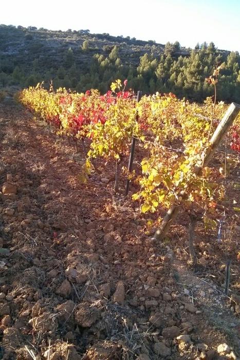 Déclarations de récolte et de stocks: 100%dématérialisés en 2016   Le Vin et + encore   Scoop.it