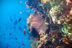 This may be the most intimate look at the Great Barrier Reef we've seen | Conservation | Scoop.it