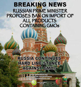 #Russia joins more than 30 other countries that have banned #GMO the import of #GE crops and despite the harms of GE crops, giant biotech is pouring thousands of dollars to defeat GMO labeling in O... | Messenger for mother Earth | Scoop.it