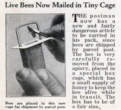 Live Bees Now Mailed in Tiny Cage - Modern Mechanix (Feb, 1932) | Pollinators: a plant focus, for backyards | Scoop.it