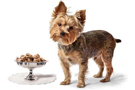 Pet Foods Go Gourmet | Food for Pets | Scoop.it