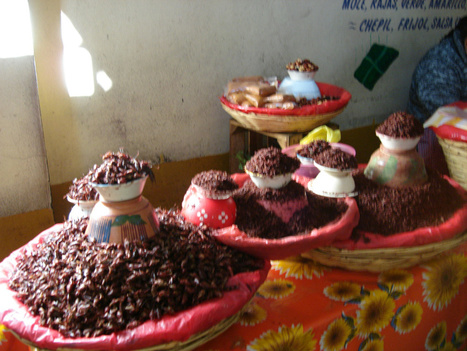10 Foods you must taste when visiting Oaxaca to Learn Spanish ... | mexican culture | Scoop.it