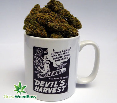 Tips For Drying/Curing Your Cannabis Buds | Grow Weed Easy | Grow Weed Easy | Scoop.it