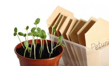 Biblioteca nos Estados Unidos além de livros, empresta sementes | PRIMEIRO CONTACTO | Scoop.it
