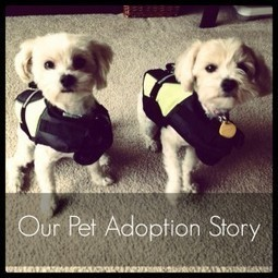 Our Pet Adoption Story Part 1 | Animal Rescue & Shelter Life | Scoop.it