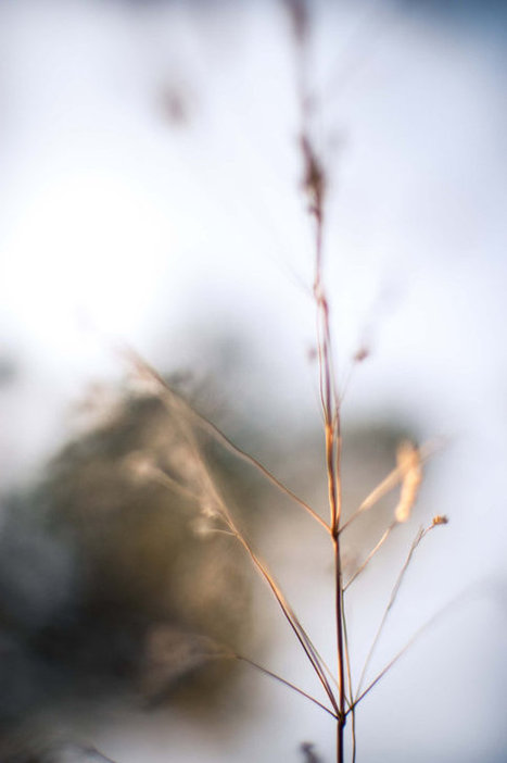 Digital Fine Art Photography of Nature   Emerging Artists & New Collectors   Scoop.it