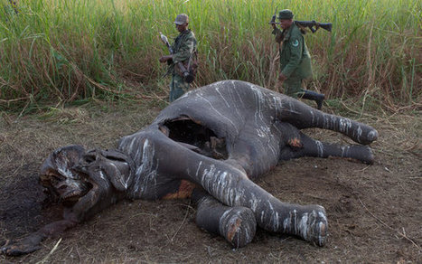 The Slaughter of Elephants in Vietnam Is Nearly Complete | GarryRogers Biosphere News | Scoop.it