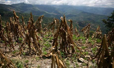 Global food crisis: Climate change imperils Guatemala's food security | Felicity Lawrence | Global development | The Guardian | Climate change challenges | Scoop.it
