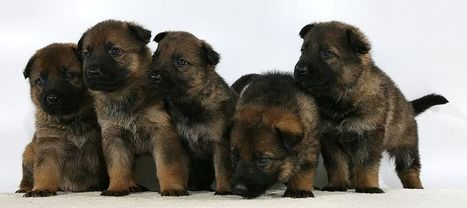 What's More Dangerous - Puppies or Fracking? | Fracking | Scoop.it