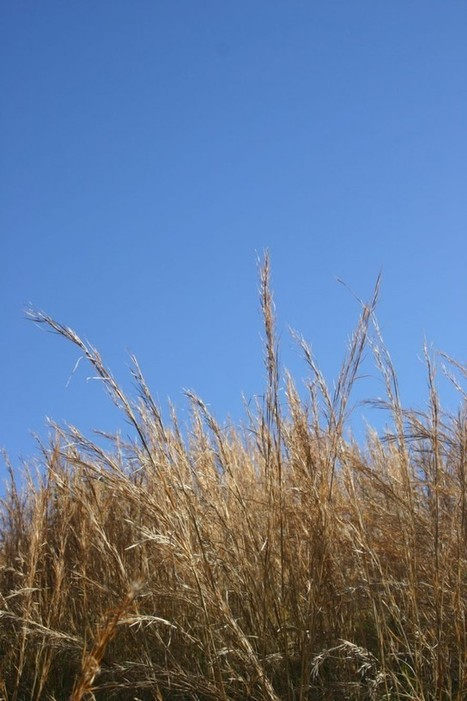 Wind In Grass –1'31″ | DESARTSONNANTS - CRÉATION SONORE ET ENVIRONNEMENT - ENVIRONMENTAL SOUND ART - PAYSAGES ET ECOLOGIE SONORE | Scoop.it