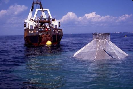 Bibliography: Open ocean aquaculture | aquaculture | Scoop.it