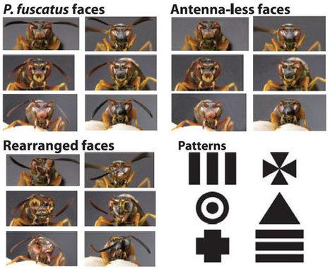 Nos égaux les bêtes | EntomoScience | Scoop.it