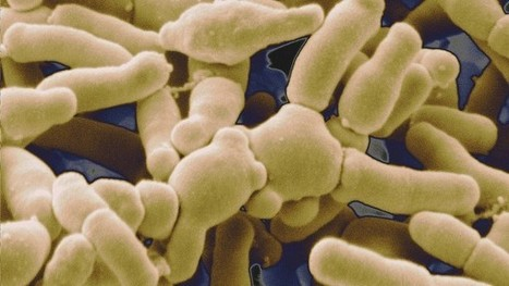 Gut microbes give anticancer treatments a boost | Microbiology | Scoop.it