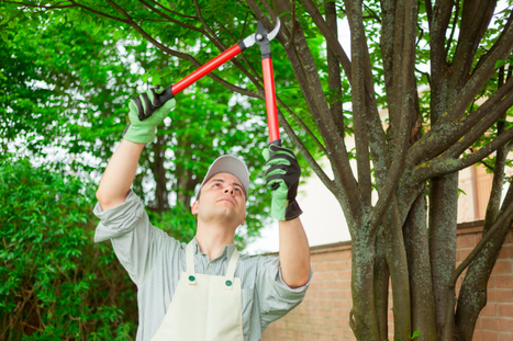 Tree Health Issues Which May Drive You towards Booking a Professional Tree Service » CJ S Tree Service of Omaha | Tree Service | Scoop.it