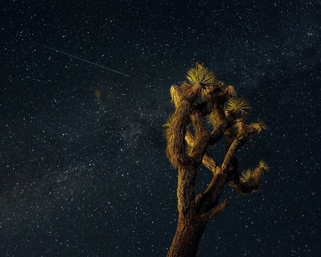 Opening Night of the Perseid Meteor Showers Annual Show | ScienceNow | Scoop.it