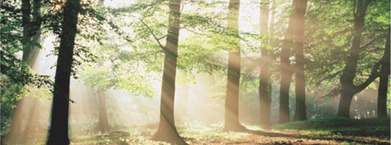 Dossier | Marketing et développement durable | Developpement durable & marketing | Scoop.it