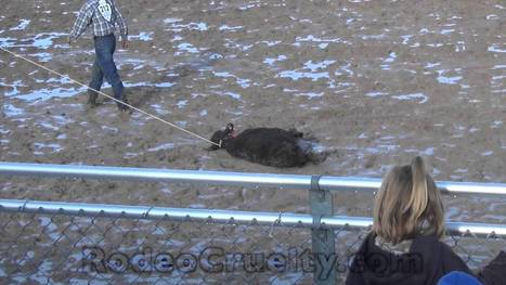Rodeo's Utterly Worthless Judges - YouTube | Nature Animals humankind | Scoop.it