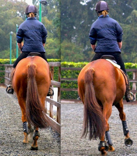 Animal Health Trust Study: Saddle Slip May Be Early Indicator of Lameness in Sport Horses | all things horsey | Scoop.it