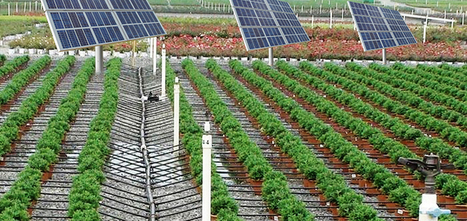 GSFC 'Sardar Package' to Promote Renewable Energy Use For Irrigation | water pumps online in India | Scoop.it