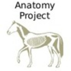 (EN) - Equine Anatomy Project | equimed.com | Glossarissimo! | Scoop.it