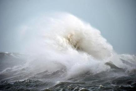 Storms 'slaughter' kills over 21,000 birds on French coast | Sustain Our Earth | Scoop.it