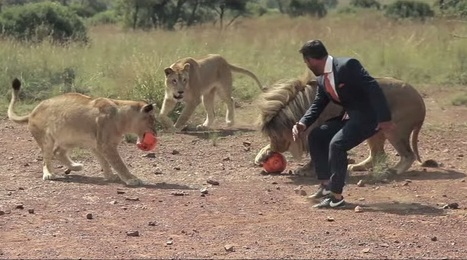 Kevin Richardson is Playing Football with Lions | Animals | Scoop.it