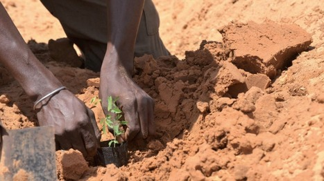 Identifying opportunities for climate-smart agriculture investments in Africa | Climate Smart Agriculture | Scoop.it