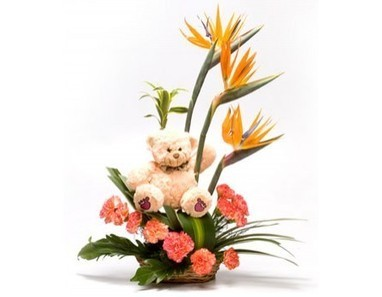 Bop With Teddy | 12 Red Roses N 2kg Fruit Basket | Scoop.it