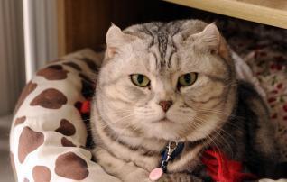 Les animaux domestiques également victimes du tsunami au Japon - Le Quotidien.lu | Japan Tsunami | Scoop.it