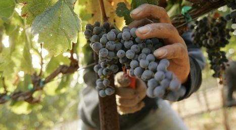 La biodynamie prend de la bouteille - Slate.fr | vin et société | Scoop.it