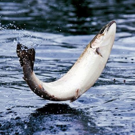 Loch Duart - YouTube   smokes salmon   Scoop.it