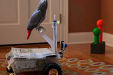 Pet Parrot Learns to Control Robot | Robots and Robotics | Scoop.it