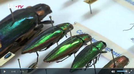Deux millions d'insectes à Gembloux | Variétés entomologiques | Scoop.it