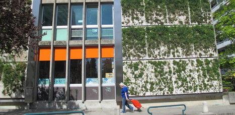 Genève : La cité pourrait voir fleurir des murs de verdure | Le flux d'Infogreen.lu | Scoop.it