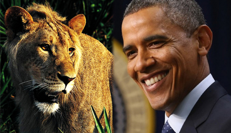 US Animal Advocacy group wants Obama to visit African lions | Wildlife Trafficking: Who Does it? Allows it? | Scoop.it