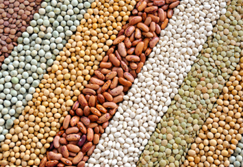 Increase the Longevity of your Seed and Grain Storage   Grain Handling and Storage   Scoop.it