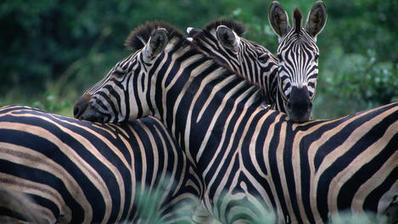 Top 5 wildlife parks in South Africa - travel tips and articles - Lonely Planet | Volunteering Abroad | Scoop.it
